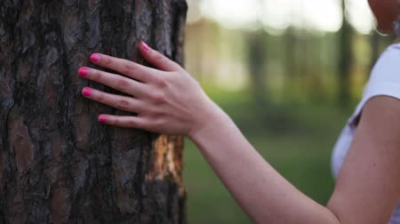 prst : young woman hand and pine tree bark