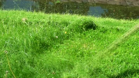 trawnik : Gardener cuts the grass with a lawnmower.