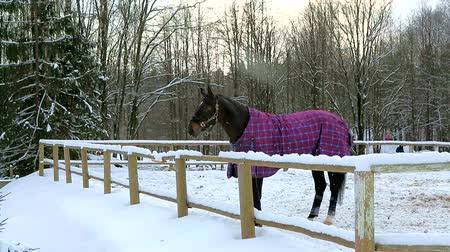 égua : Horse in winter is wearing a blanket in paddock stables.