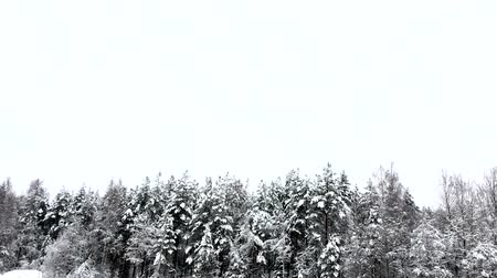 сказка : Snow falls on the forest in winter. Landscape of nature snowy.