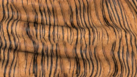 кошачий : Waves of tiger-colored fabric. Abstract 3D motion texture.