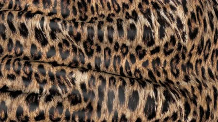 leopard cat : Skin of a leopard in motion. Background of the canvas ripples.