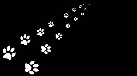tlapky : Background with animal paw print. Cartoon comic funny paws. Dostupné videozáznamy