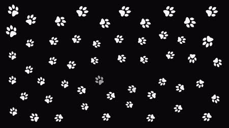 gato selvagem : Background with animal paw print. Cartoon comic funny paws. Stock Footage