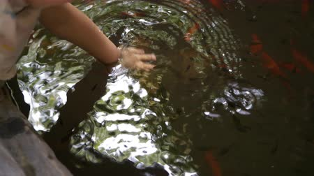 невинный : baby hand playing in water pond with fish