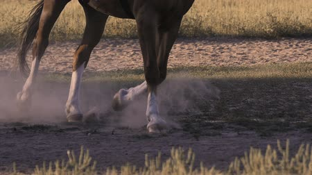 terbiye : Running horse makes dust