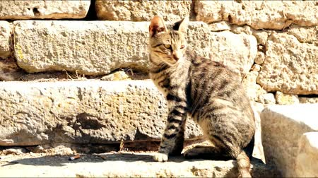 bully : a fluffy, brown street cat basks in the sun against a background of large blocks of old stones on a street in Greece