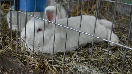Two small white rabbits in a cage Dostupné videozáznamy