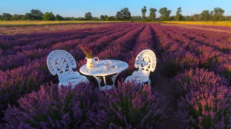 вереск : Romantic idea in lavender field at sunrise, 4K time lapse in HDR