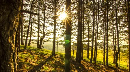 Карпаты : 4K Time Lapse Sun in pine forest Стоковые видеозаписи