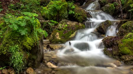 musgo : Mountain stream waterfall between rocks deep in the forest 4k time lapse Vídeos