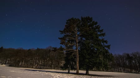 4K Time Lapse Stars Over The Pines