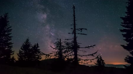 Milky way time lapse 4k in carpahtians trees