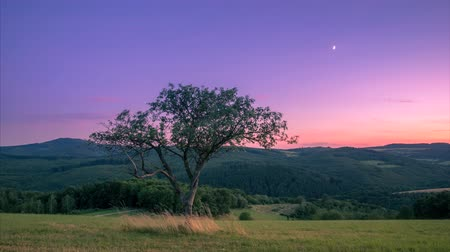 4K time-lapse lone tree on a hill overlooking the countryside after sunset with moon in the sky