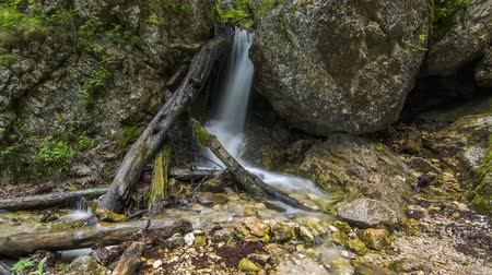 4K Timelapse Waterfall stream between rocks and falling trees Dostupné videozáznamy