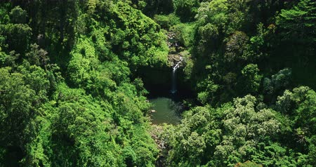 скат : Aerial view flying over amazing waterfall pool in tropical rain forest jungle Стоковые видеозаписи