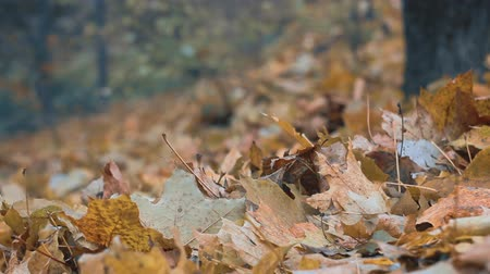 borders : a fallen leaves in autumn forest