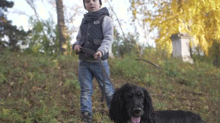 recess : Autumn forest with a boy and his dog. black Spaniel