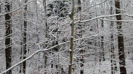 carrancudo : Walking in a winter forest during a snowfall Stock Footage