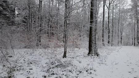 иероглиф : Walking in a winter forest during a snowfall Стоковые видеозаписи