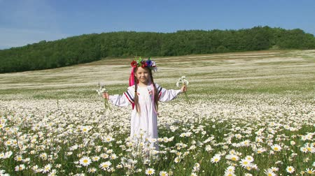 otlak : Little cute girl in the garland with flowers and multi-colored ribbons and in white long gown is having fun in the field of blossoming chamomiles. She is holding bouquets of flowers in her hands stretched by sides and jumping. Blue sky and green forest in Stok Video