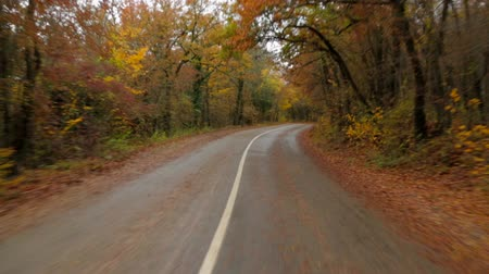 cena não urbana : Time lapse video shot from inside of a passenger car moving fast in autumn forest along winding asphalt road with roadsides covered with yellow leaves with some cars standing and passing by. Vídeos