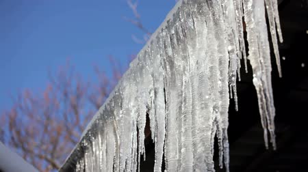 snowbreak : This is a beautiful shot of dripping water from a row of long melting icicles hanging on roof at thaw time against tops of trees and blue sky on background. Stock Footage