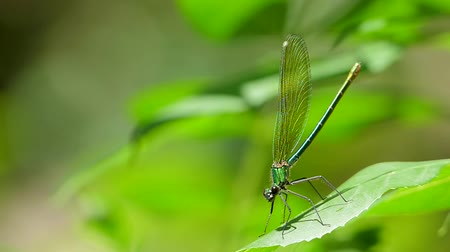 stylization : A dragonfly close-up sits on a leaf.