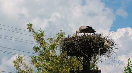 receptacle : Stork feeds children in the nest Stock Footage