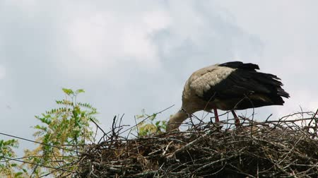 receptacle : the stork builds a large nest