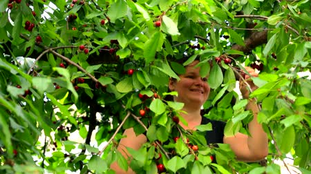 smiling girl is harvesting a cherry