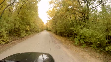 路地 : The car rides through the autumn forest