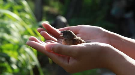 young sparrow : A little bird in the hand Stock Footage