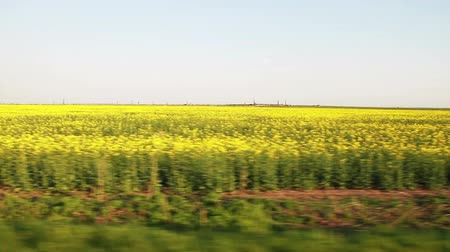 florido : Yellow and green flowers under blue sky from fast moving car.