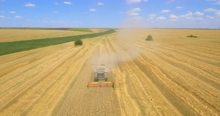 Aerial shot of combine harvester gathers the wheat in summer day. Harvesting grain field, crop season. 4K.