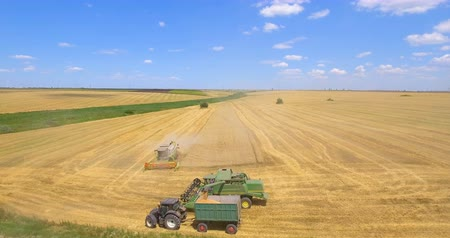 Aerial view of a combine and tractor harvesting on wheat field in summer day. 4k