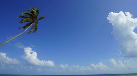 Timelapse of single lonely coconut tree and beautiful formation of moving cloud at the beach with copy space area.