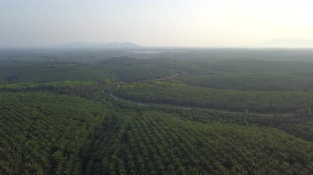 mezőgazdasági : 4K Footage. Aerial view of palm oil plantation in Asia. Agricultural background. Stock mozgókép