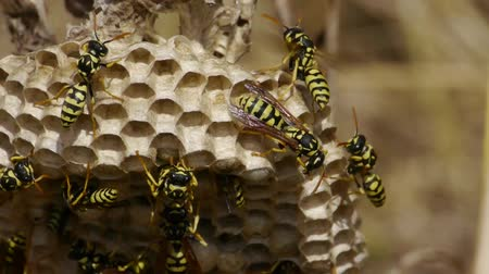 gruesome : bees in the hive