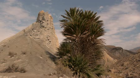 almeria : rock and palm tree with blue sky in the badlands of Tabernas Desert in Almera