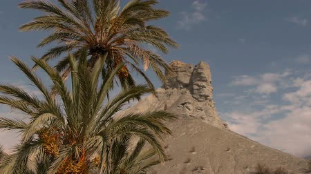 andalucia : rocks with palm trees and blue sky in the desert of Tabernas, Almeria Stock Footage