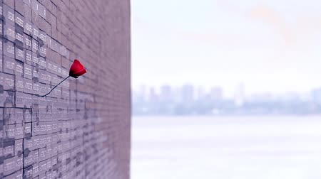 síremlék : Red flower in Monument to the victims of the Argentine Dictatorship Stock mozgókép