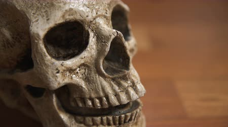 crânio : Human Skull CU tracking shot, shallow depth of field