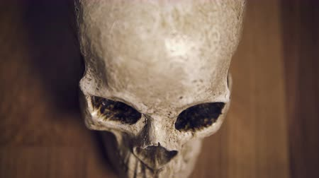 defin : Human Skull CU top shot with wooden background, shallow depth of field
