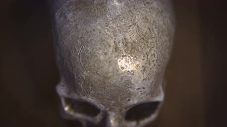 crânio : Human Skull CU overhead shot with wooden background, shallow depth of field. Vintage colors