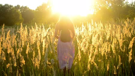 pussy : young girl with long flowing hair is on the field with a high dry grass with the bright sun during sunset