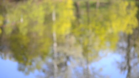 лиственный : blurred background reflection trees in water