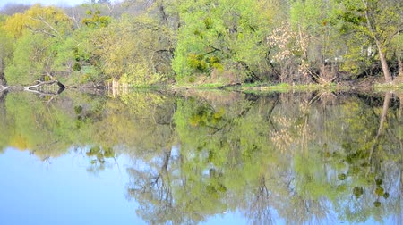лиственный : trees on bank and reflection in the water, spring Стоковые видеозаписи