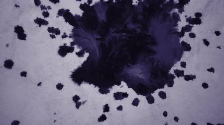 marbling : Black ink abstract stains flow on a white surface. Black ink spot spreads black ink spot spreads on a purple blue background isolated close-up