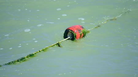 latarnia morska : Red old enclosing buoys with green algae float on waves in the sea on summer sunny day Wideo